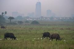 03-13-18 Nairobi National Park-13.jpg