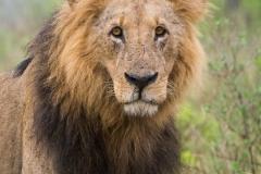 03-13-18 Nairobi National Park-139.jpg