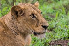 03-13-18 Nairobi National Park-149.jpg