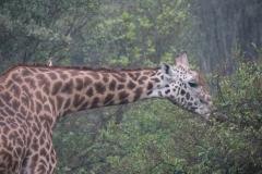 03-13-18 Nairobi National Park-2.jpg