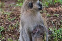 03-13-18 Nairobi National Park-208.jpg