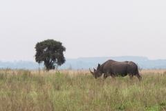 03-13-18 Nairobi National Park-222.jpg