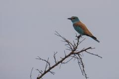 03-13-18 Nairobi National Park-274.jpg