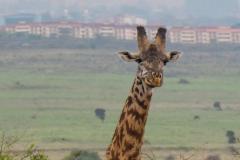 03-13-18 Nairobi National Park-300.jpg