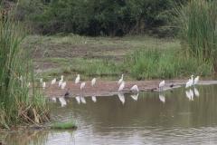 03-13-18 Nairobi National Park-310.jpg