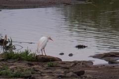 03-13-18 Nairobi National Park-314.jpg
