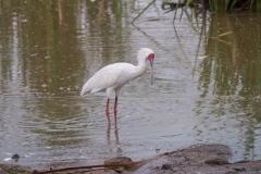 03-13-18 Nairobi National Park-316.jpg