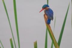 03-13-18 Nairobi National Park-39.jpg