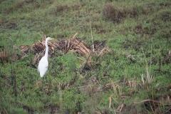 03-13-18 Nairobi National Park-60.jpg