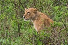 03-13-18 Nairobi National Park-96.jpg