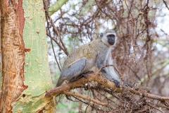 09-29-16 Lake Manyara National Park-159.jpg