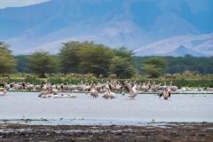 09-29-16 Lake Manyara National Park-167-Edit.jpg