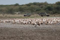 09-29-16 Lake Manyara National Park-179.jpg