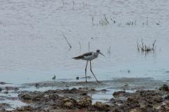 09-29-16 Lake Manyara National Park-195.jpg