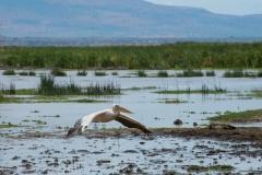 09-29-16 Lake Manyara National Park-198.jpg