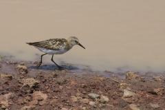 09-29-16 Lake Manyara National Park-204-Edit-Edit.jpg