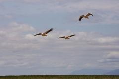 09-29-16 Lake Manyara National Park-209-Edit.jpg