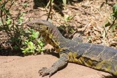 09-29-16 Lake Manyara National Park-276.jpg