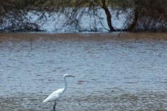 09-29-16 Lake Manyara National Park-288.jpg