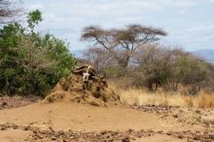 09-29-16 Lake Manyara National Park-295.jpg