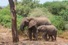 09-29-16 Lake Manyara National Park-329.jpg