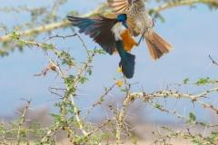 09-29-16 Lake Manyara National Park-36.jpg