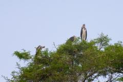 09-29-16 Lake Manyara National Park-79.jpg