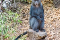 09-29-16 Lake Manyara National Park-88.jpg