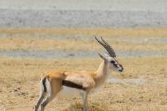09-30-16 Ngorongoro Conservation Area-249.jpg