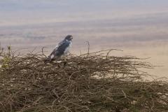 09-30-16 Ngorongoro Conservation Area-36.jpg