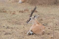 09-30-16 Ngorongoro Conservation Area-383.jpg