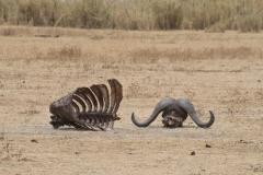 09-30-16 Ngorongoro Conservation Area-395.jpg