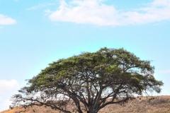 09-30-16 Ngorongoro Conservation Area-458.jpg