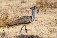 09-30-16 Ngorongoro Conservation Area-506.jpg