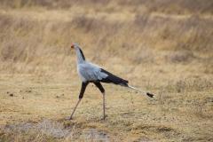 09-30-16 Ngorongoro Conservation Area-577.jpg