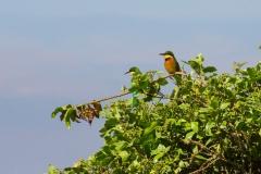 09-30-16 Ngorongoro Conservation Area-668.jpg