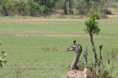 10-01-16 Serengeti National Park AM game drive-47.jpg