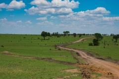 10-01-16 Serengeti National Park AM game drive-68.jpg