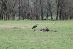 10-01-16 Serengeti National Park AM game drive-76.jpg