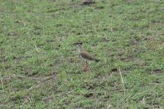10-01-16 Serengeti National Park AM game drive-84.jpg