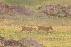 10-01-16 Serengeti National Park PM game drive-105.jpg