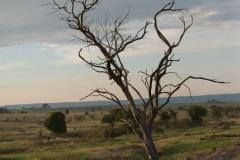 10-01-16 Serengeti National Park PM game drive-114.jpg