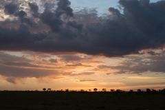 10-01-16 Serengeti National Park PM game drive-175.jpg
