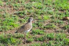 10-01-16 Serengeti National Park PM game drive-18.jpg
