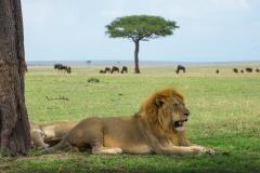 10-02-16 Serengeti National Park game drive-406.jpg