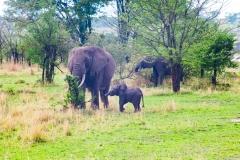 10-02-16 Serengeti National Park game drive-485.jpg