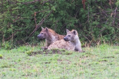 10-03-16 Serengeti National Park game drive-1.jpg