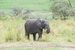 10-03-16 Serengeti National Park game drive-159.jpg