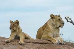 10-03-16 Serengeti National Park game drive-46.jpg