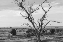 tree and sky, Serengeti National Park - Tanzania